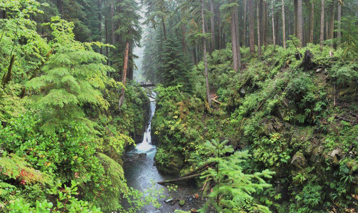 Washington's rain forest is exquisite