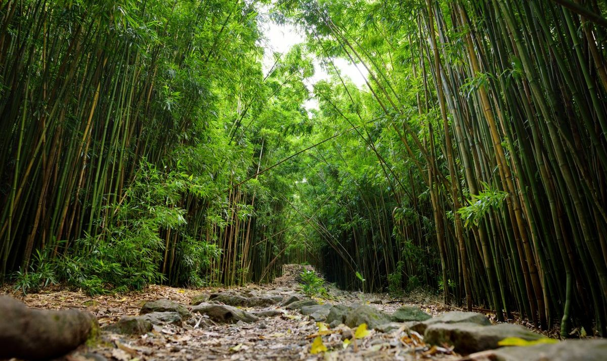 Bamboo forest to Waimoku Falls