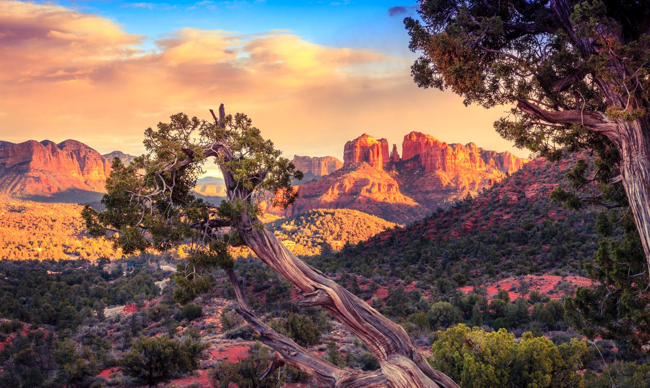 Scenic image of Cathedral Rock in Sedona, Arizona in the evening light with an old tree in the foreground