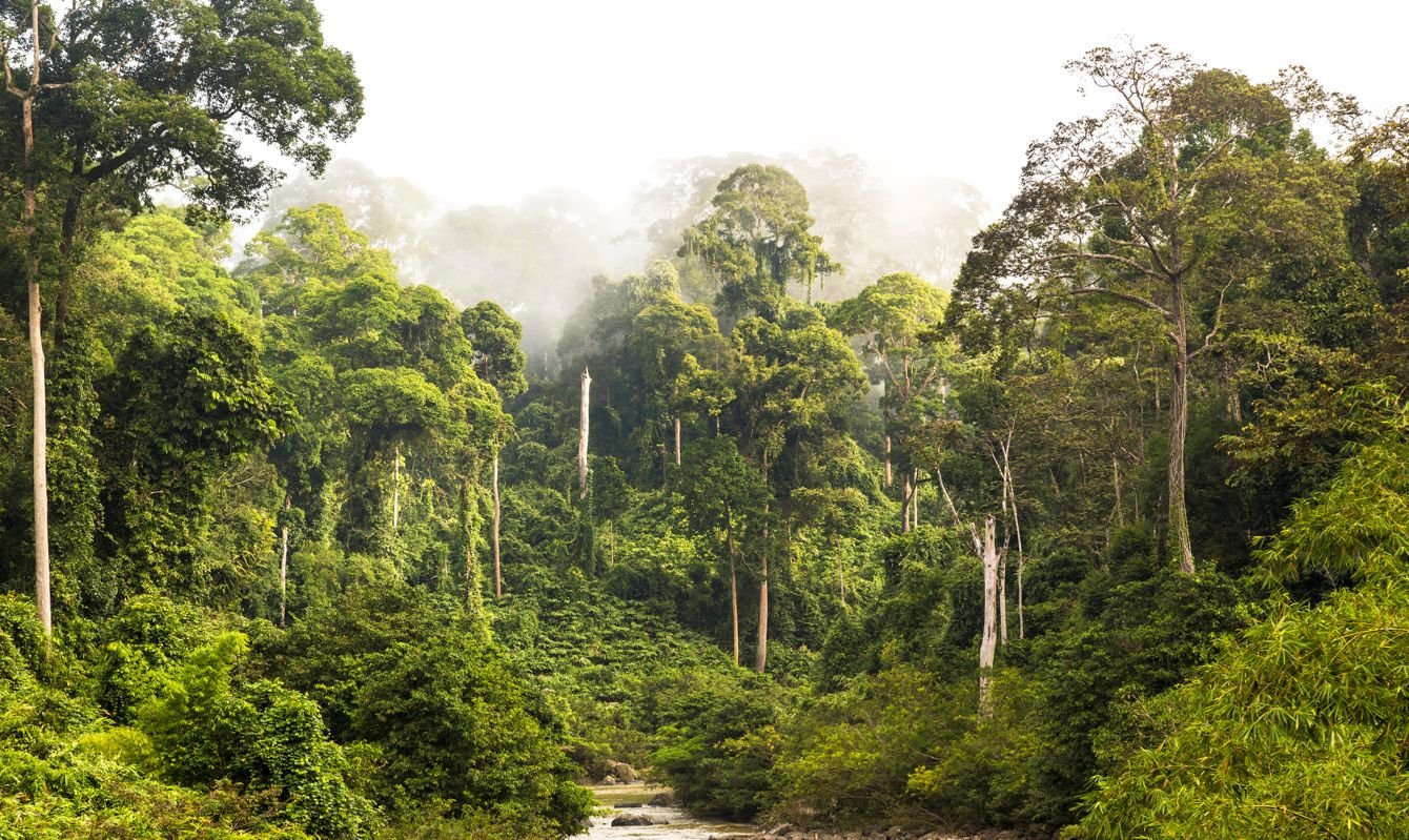 Mist & river through tropical rainforest, Sabah, Borneo, Malaysia.