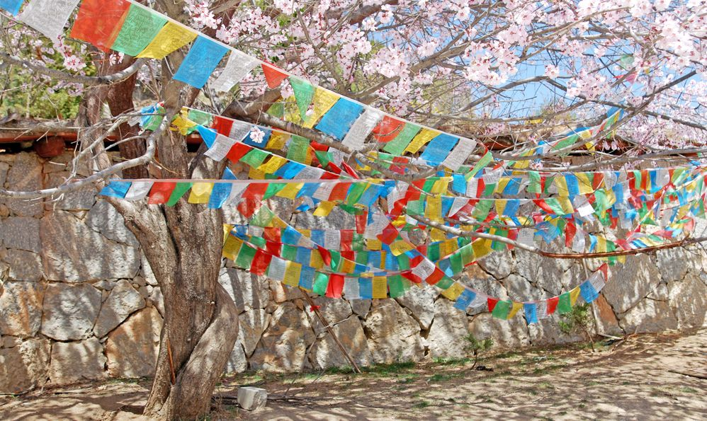 Tibetan Flag fabric yantra hanging with cherry blossom flower tree in dafo temple shangrila old town china , beautiful scene travel china