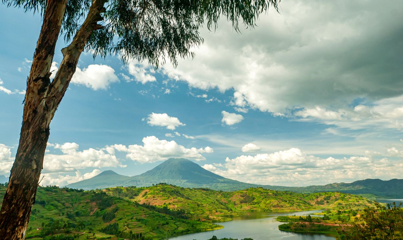 View into the mountain range of the Virunga Volcanoes, a line of 8 volcanoes in the area of the border-triangle between Rwanda, Uganda and the DR Congo. Left: Mount Muhabura (4127m) Right: Mount Gahinga (3474 m) The lake in the right part of the picture is Lake Ruhonda. The Virunga Volcanoes are home of the critically endangered mountain gorilla (gorilla beringei beringei), listed on the IUCN Red List of Endangered Species due to habitat loss, poaching, disease, and war.