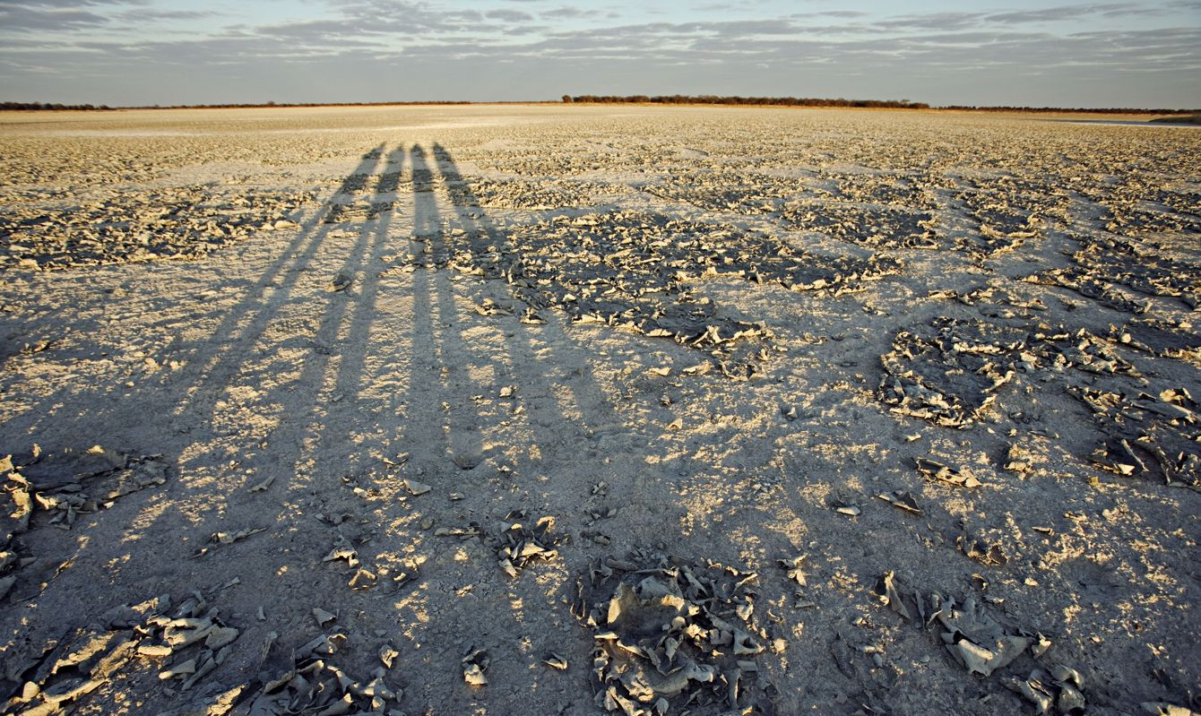 Dried mud on the surface of the Makgadikgadi Pans with long shadows from the safari vehicle. Botswana