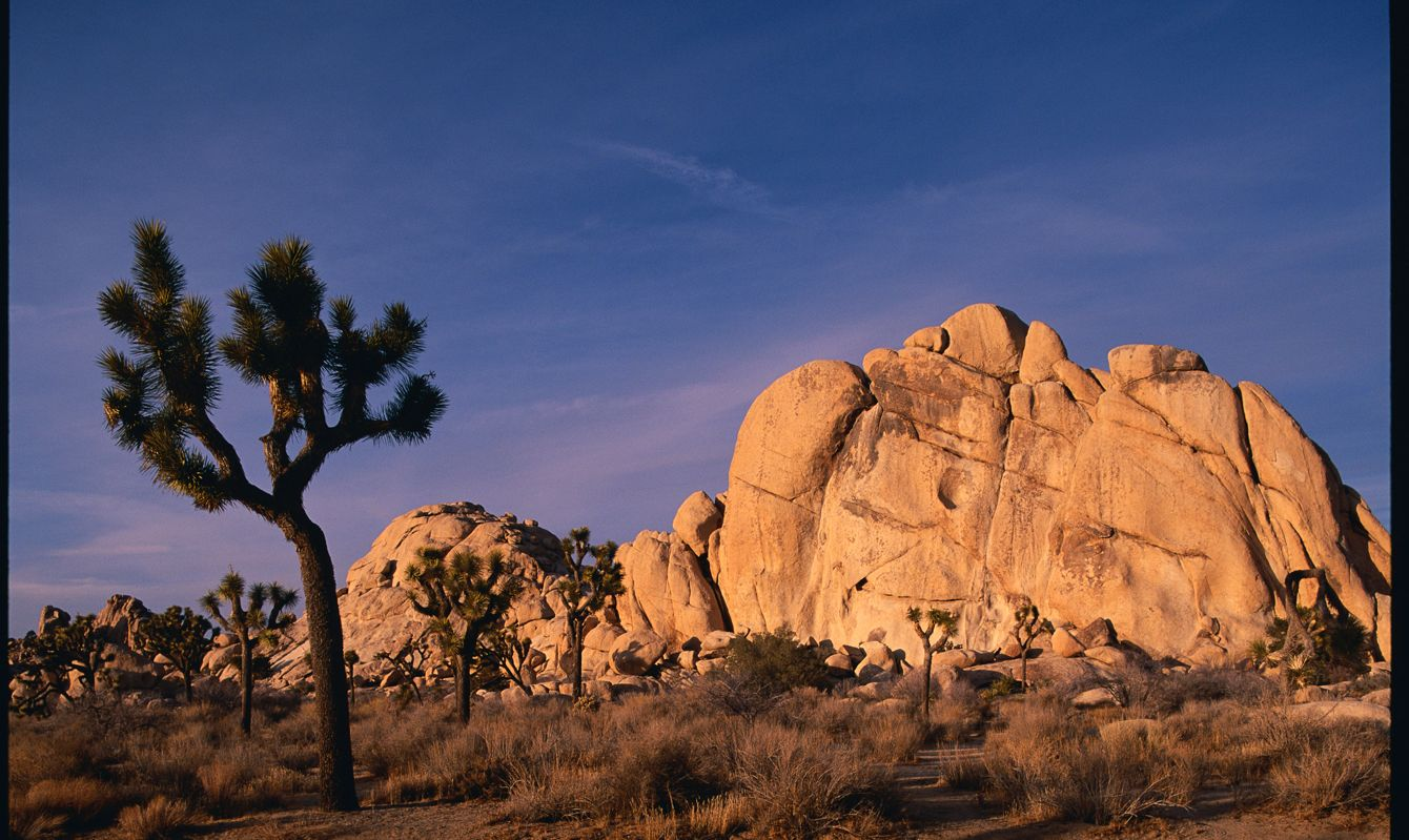 Joshua Trees and Rock Formations