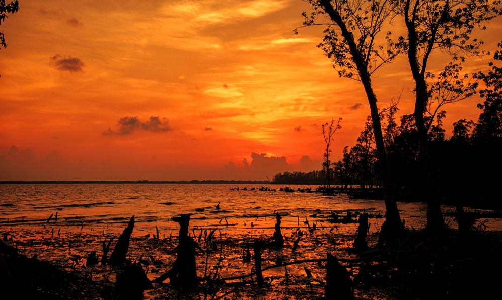A view of the sunset at Sundarban, the largest mangrove forest in the coastal region of the Bay of Bengal