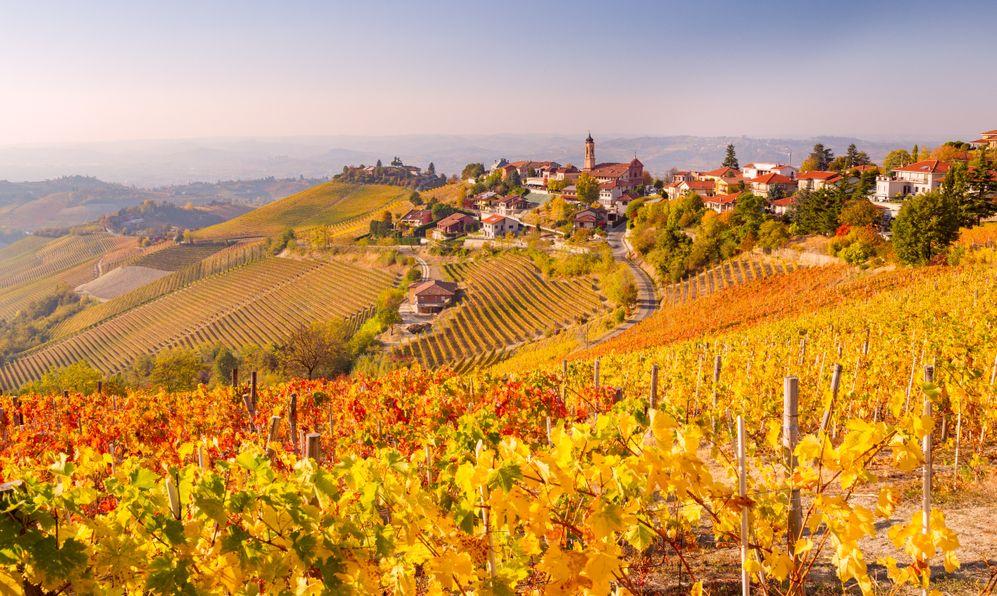 Treiso in Autumn, Langhe, Piedmont, Italy