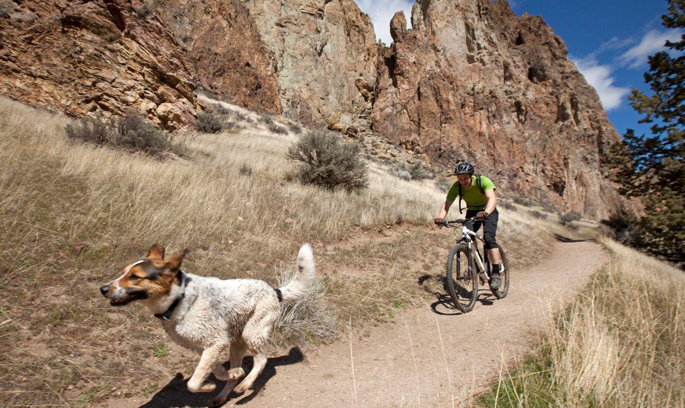 A man mountain biking a path while his dog runs just ahead.
