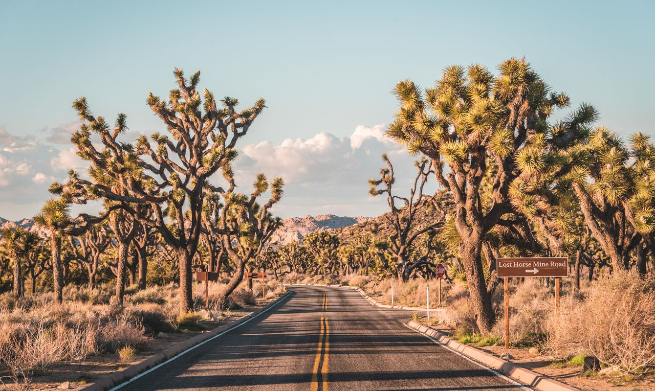 Road in the desert, in Joshua Tree National Park, California