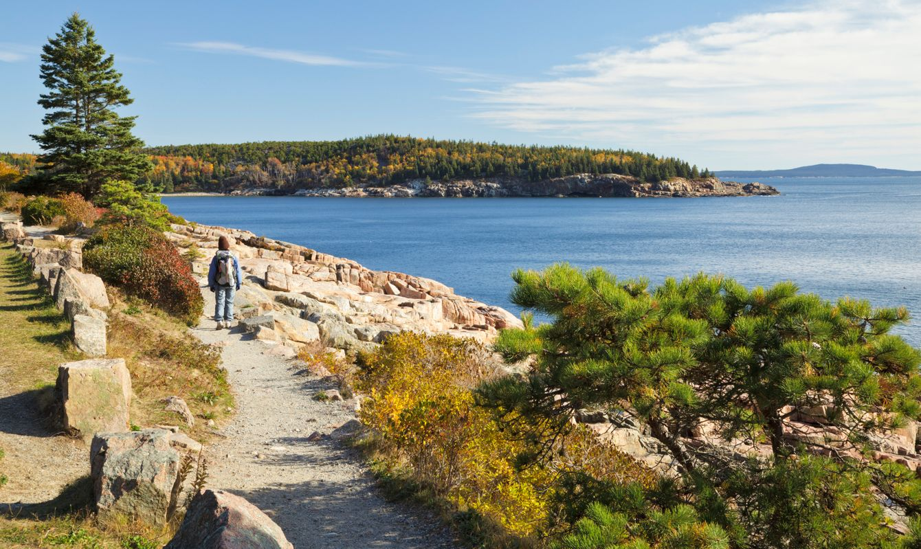A person walking on Ocean Path, looking at the fall foliage on Great Head; Acadia National Park, Maine.