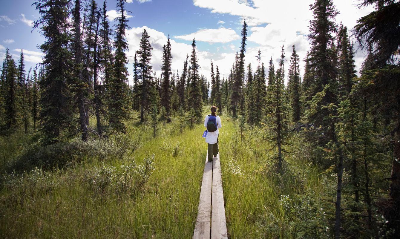 Woman Hiking on Boardwalk Trail