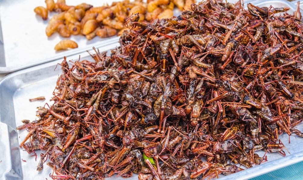 Fried locusts and worms on local food market