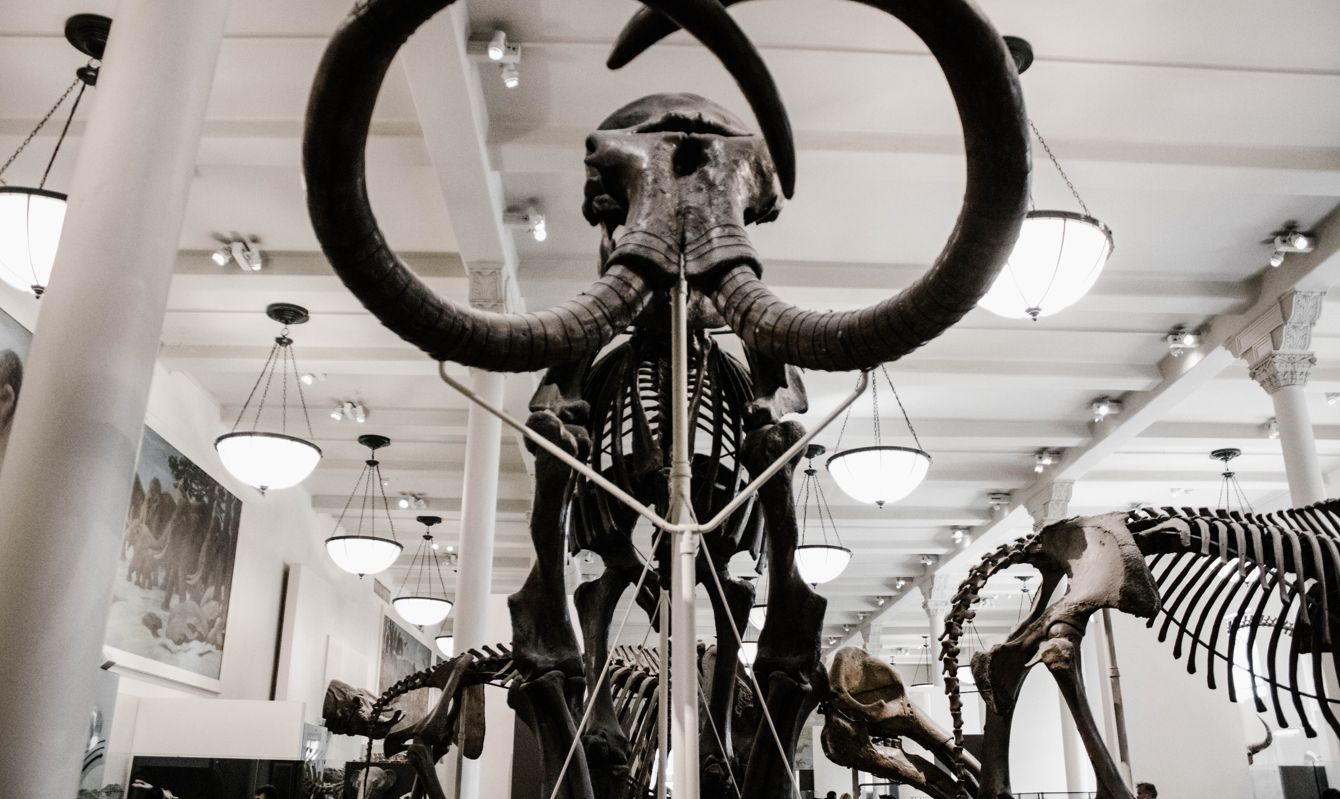 Black and White photo of a Mammoth at the American Museum of Natural History, New York, United States