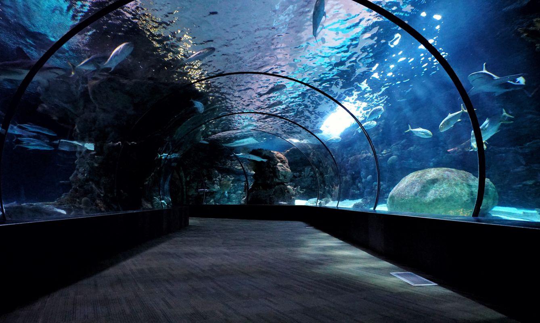 Omaha's Henry Doorly Zoo and Aquarium, Omaha, United States