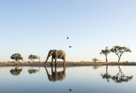 Essential Botswana Travel Tips