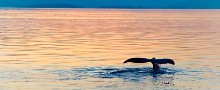 The Very Best Sites for Whale Watching
