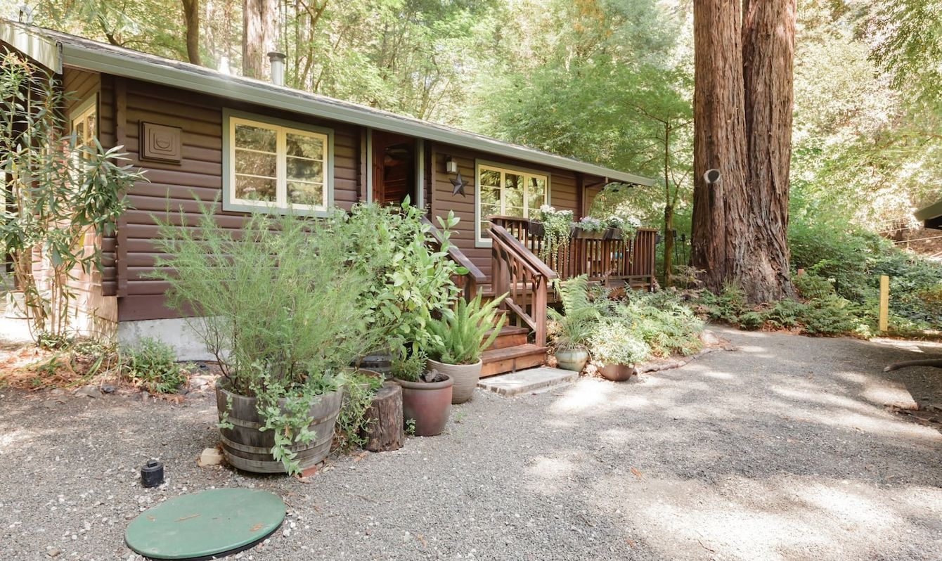 cabin in redwood forest