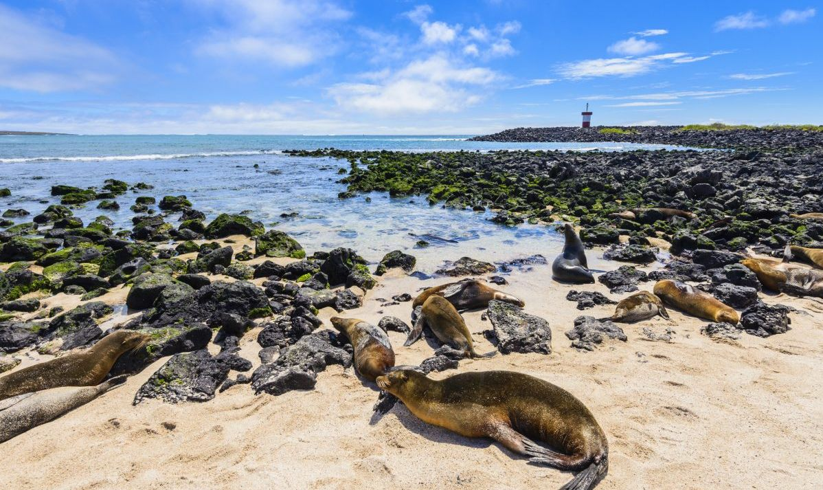 Fur Seals On Galapagos Beach