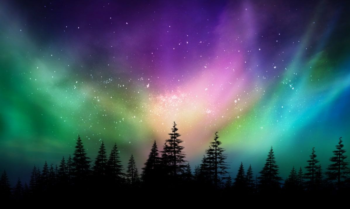 Northern Lights Shine Pink Green And Blue Over Pine Forest