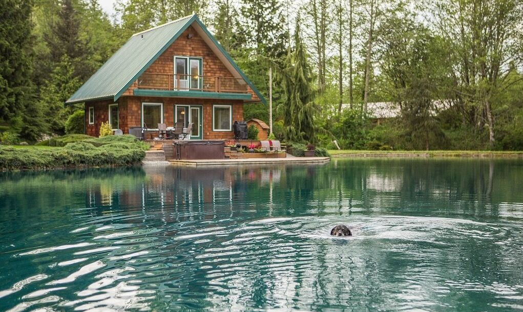 Log cabin overlooking lake, and dog swimming in the water.