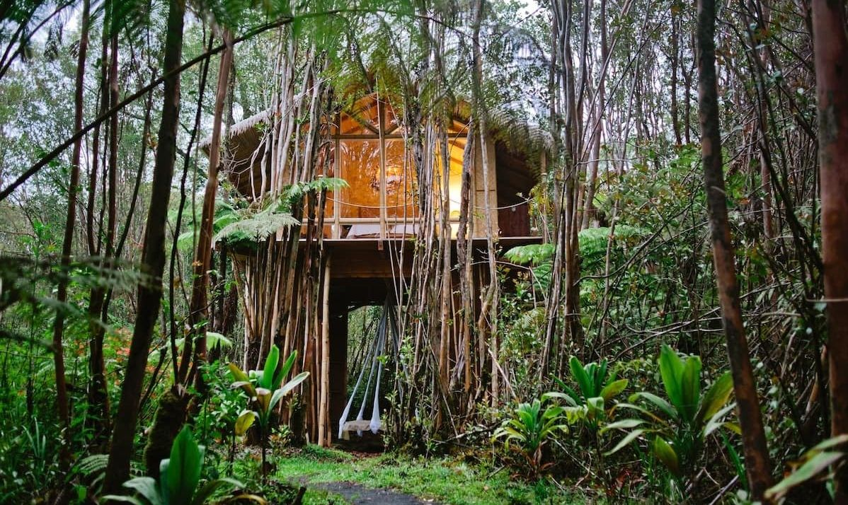 Cozy treehouse in a jungle setting.