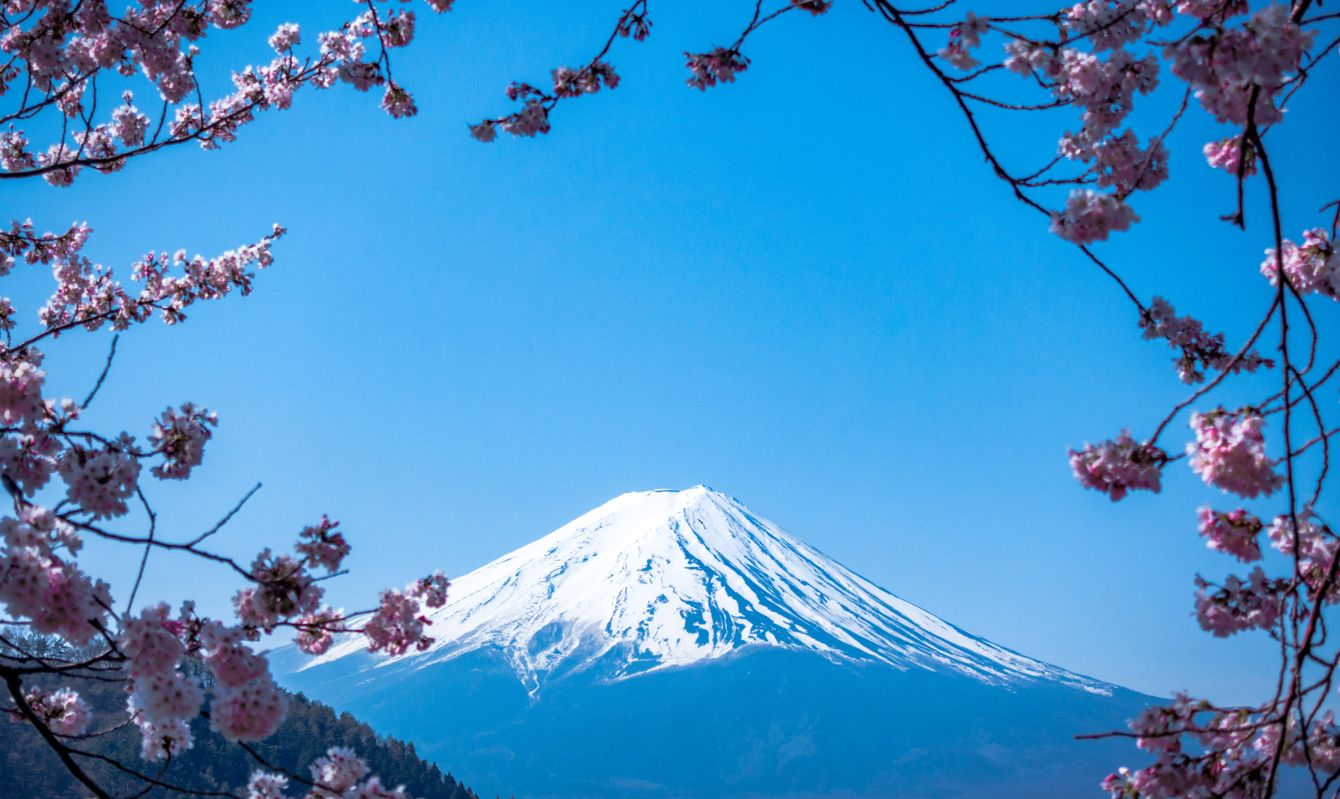 The snowy peak of Mount Fuji against blue sky framed by cherry blossom.