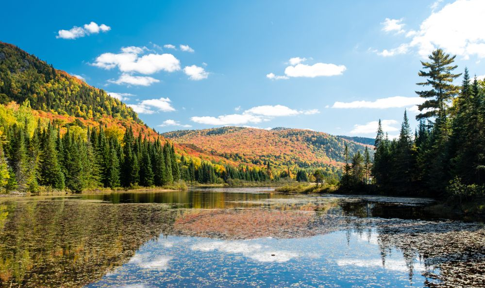 """Autumn leaves seen from the National Park """"Mont-Tremblant"""" in the Laurentian Plateau in Quebec, Canada"""