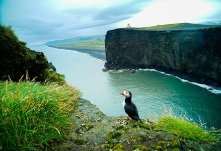 Plan Your Trip to See Puffins in Person