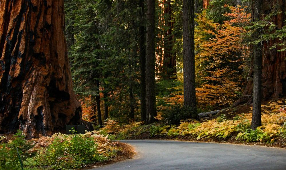 Sequoia National Park, California in the fall