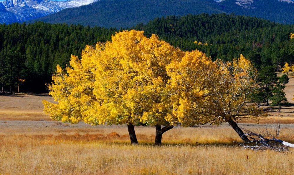 Rocky Mountain National Park, Colorado autumn