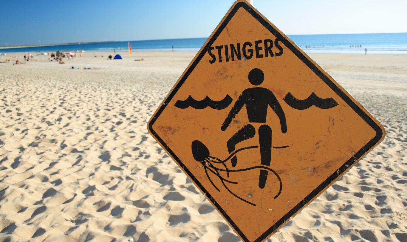 """Jellyfish warning sign, cable beach, western Australia"""