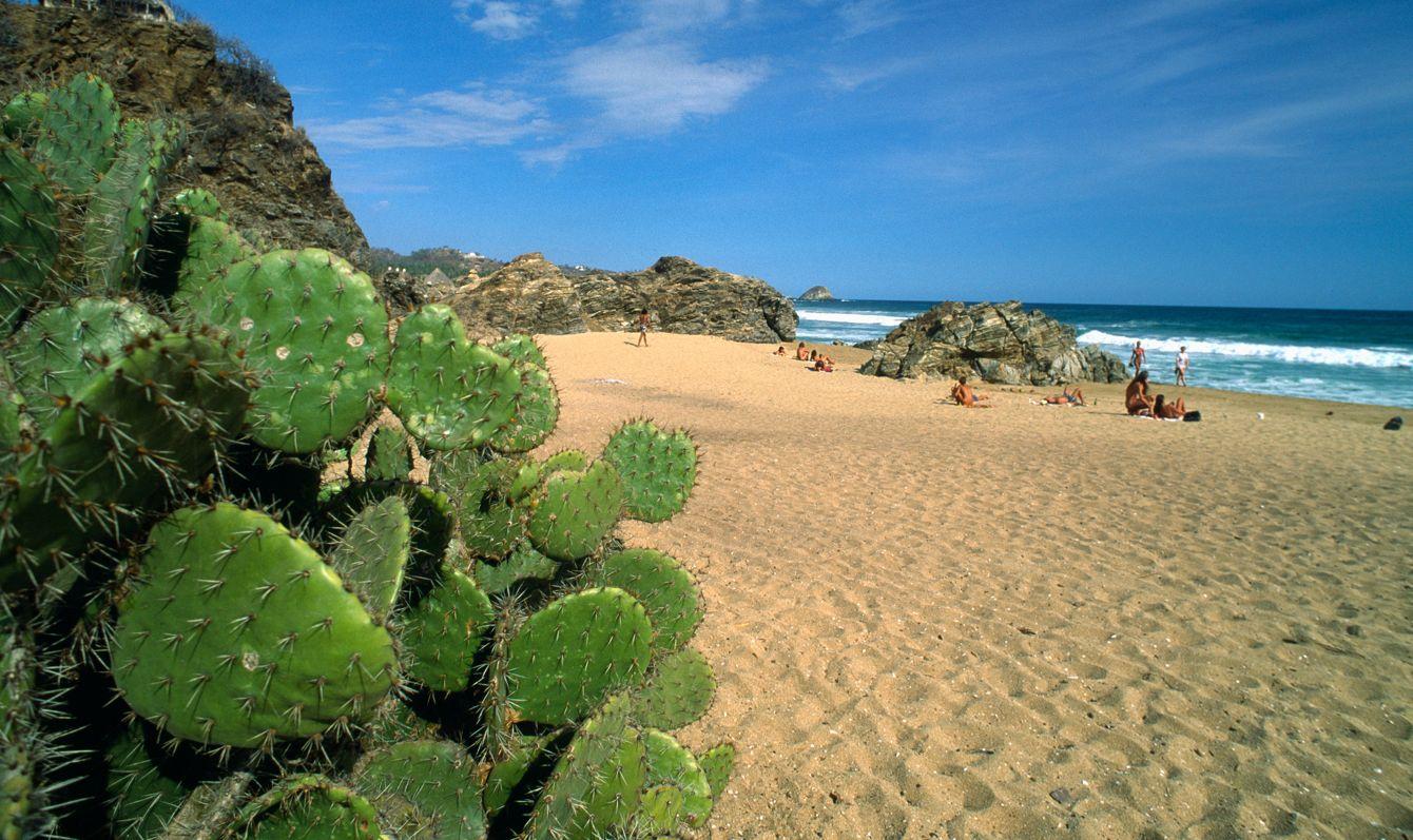 Cactus at Zipolite Beach