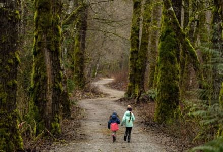 Hike These Awe-Inspiring Rainforest Hiking Trails