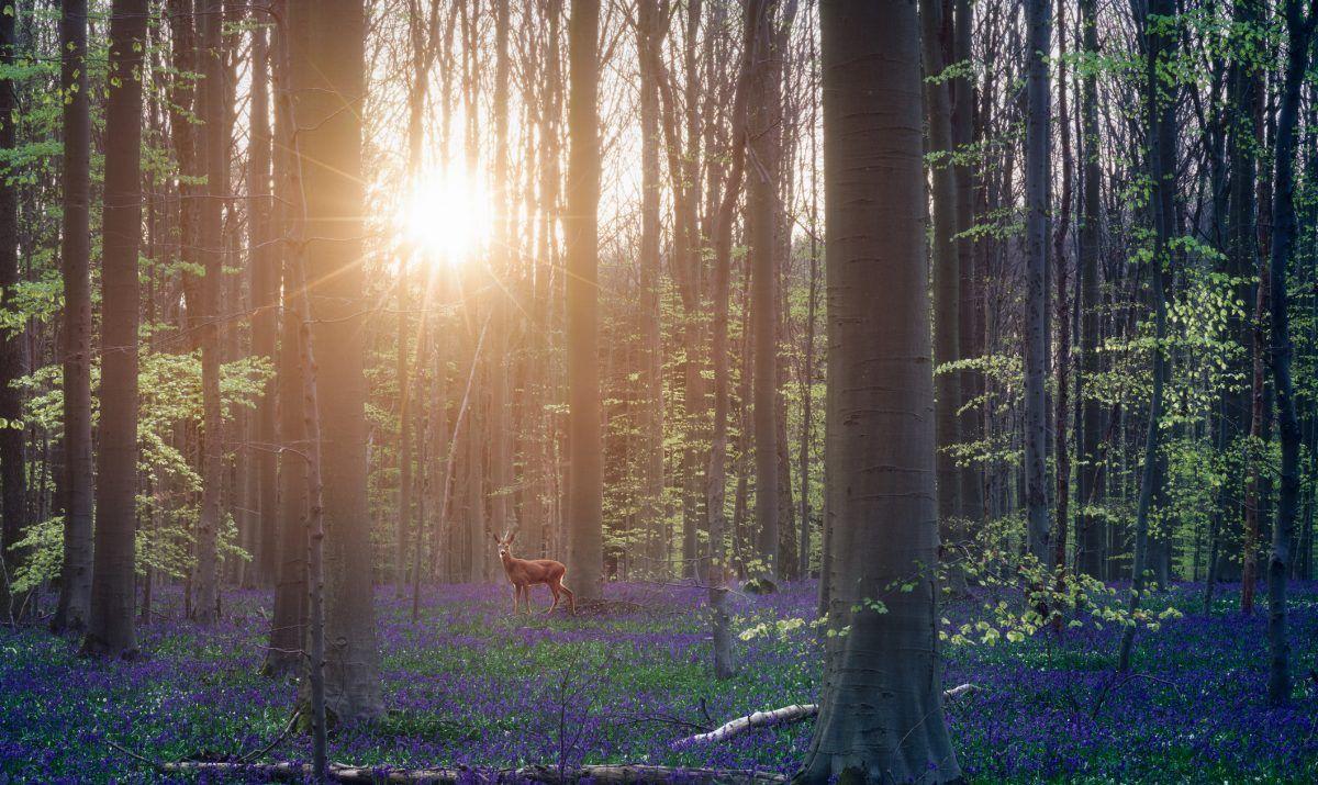 Deer in forest at sunrise