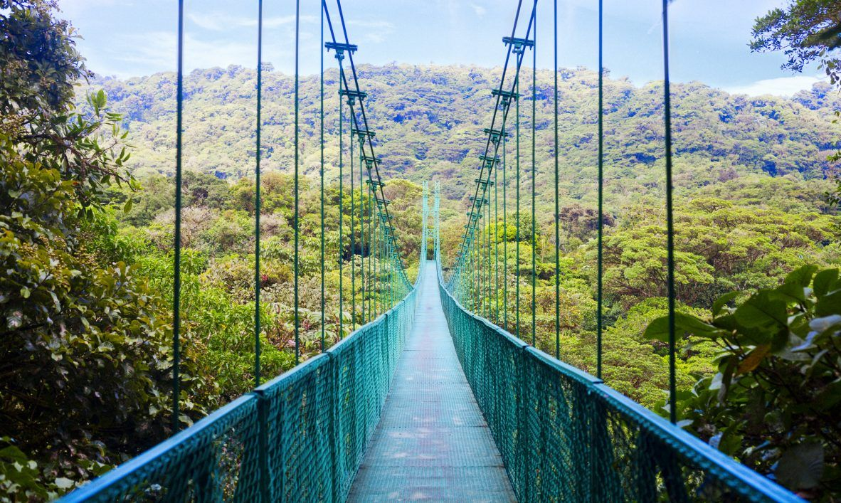 Suspension bridge in cloudy forest