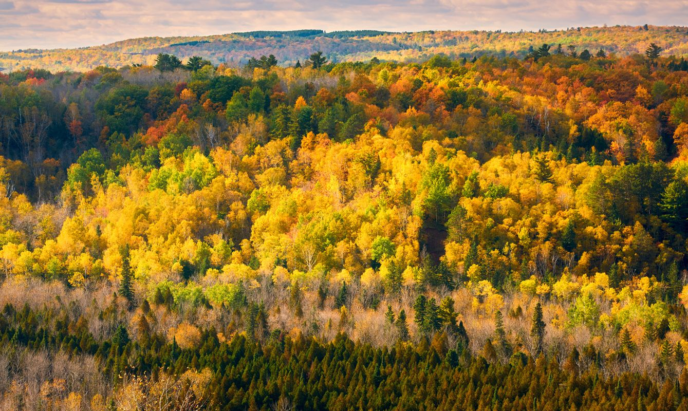 Beautiful autumn color in Jay Cooke State Park