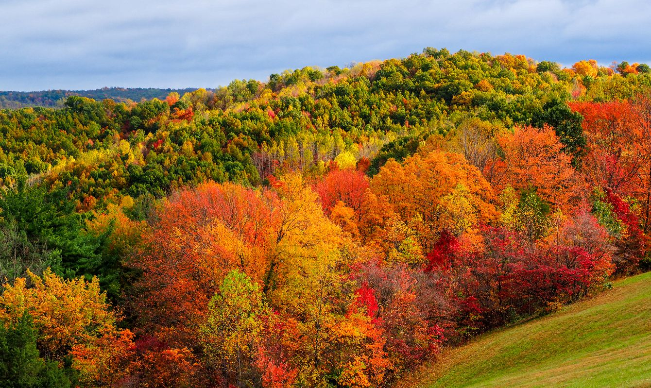 Colors of autumn shown in the hills of Hocking Hills Ohio.