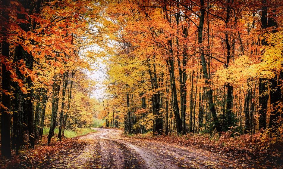 Forest Drive in Autumn. The Covered Road in Michigan's Houghton County. Seasonal fall colors background with copy space.