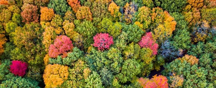 Midwest Fall Getaways Perfect for Leaf Peeping