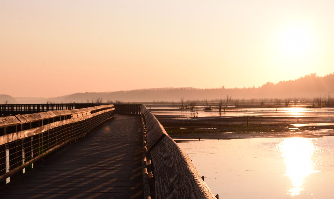 Beautiful Sunrise On Elevated Wooden Walkway At Billy Frank Jr. Nisqually National Wildlife Refuge